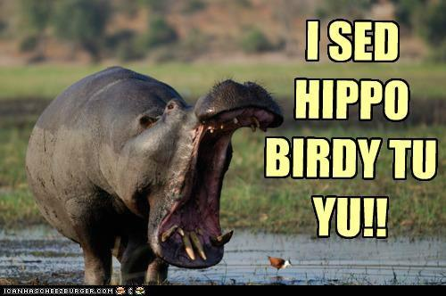 hippo.jpeg